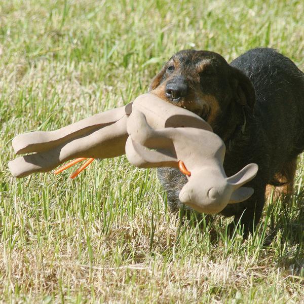 Waidwerk Apportier Kaninchen